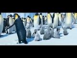Марийский танец пингвинят